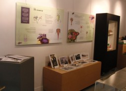 Expo_les_Insectes_2010_7